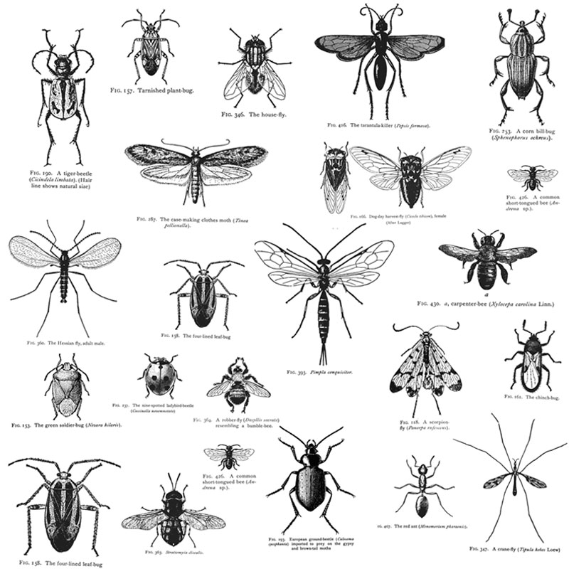 Insect_White_Thumbnail